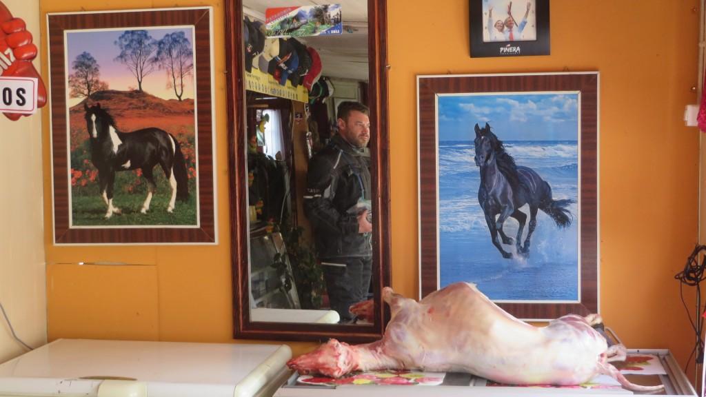 dead lamb Patagonia