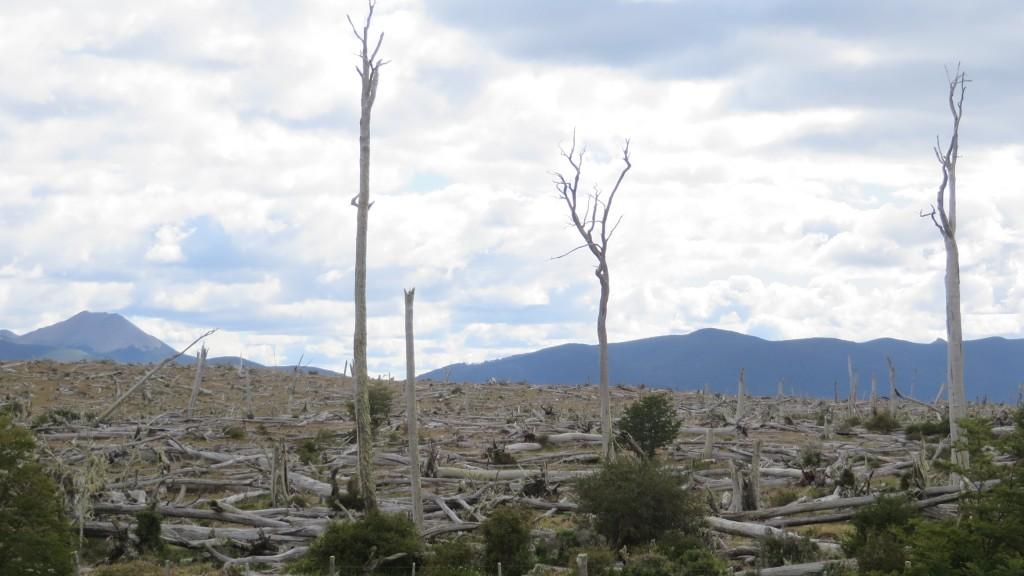 dead trees ushuaia