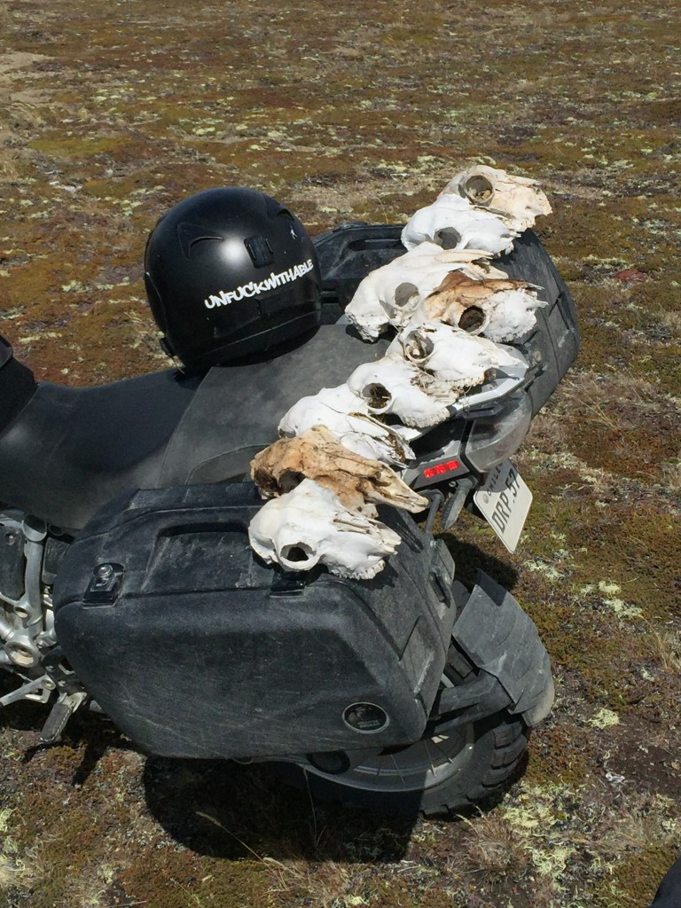 skulls and bike